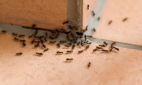 mieren verdelgen Emmen